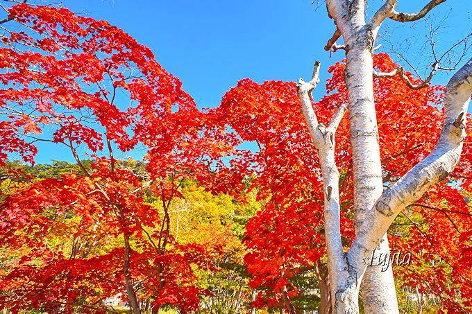 竜頭の滝の紅葉が日光で一番早い!日光湯元温泉・湯ノ湖で紅葉狩り