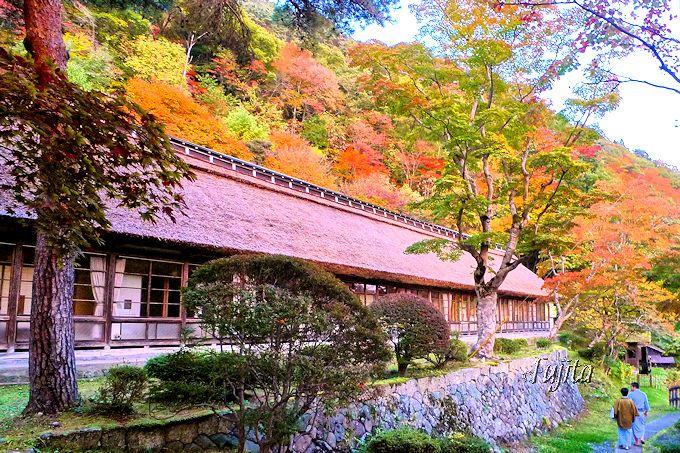 大沢温泉菊水館は、裏山が全山紅葉して茅葺屋根に絶妙にマッチ