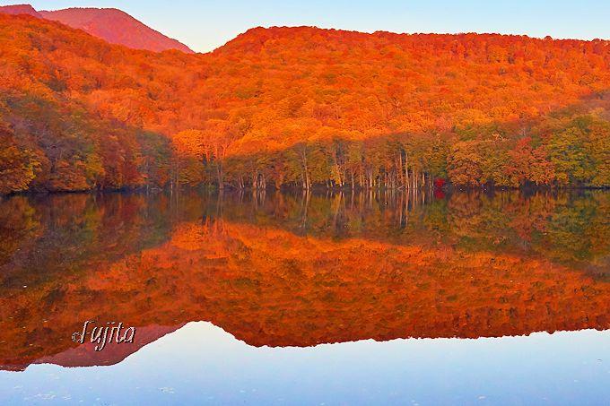 蔦沼の紅葉は朝焼けに燃え上がる!