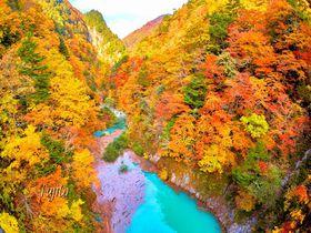 高瀬渓谷の紅葉がインスタ映え!長野・葛温泉で絶景の紅葉狩り