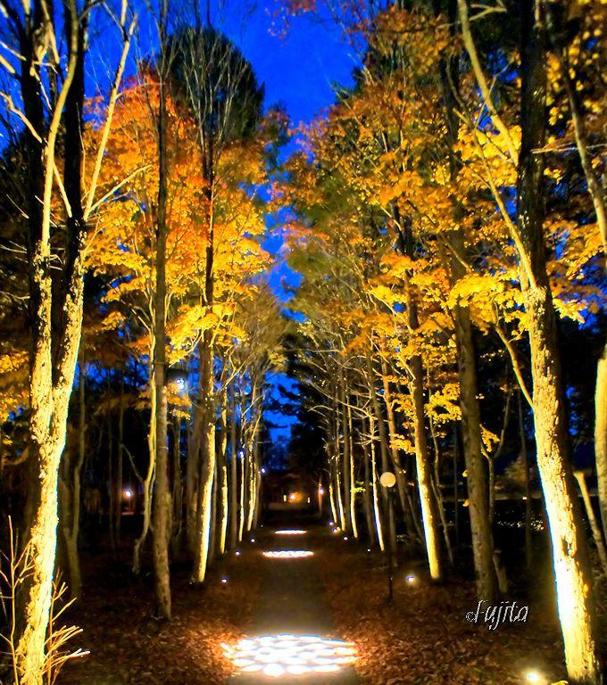 軽井沢高原教会の紅葉ライトアップは、ロマンチックな雰囲気満点!