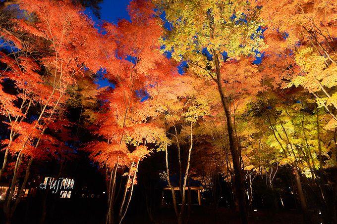 軽井沢唯一の紅葉ライトアップ!ホテルブレストンコートの紅葉狩りは雰囲気満点