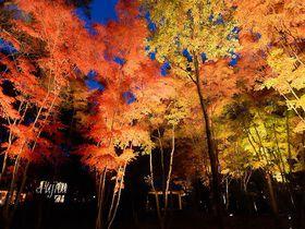 軽井沢の紅葉ライトアップ!中軽井沢・高原教会で紅葉狩り