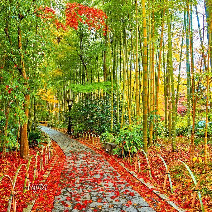 修善寺の紅葉は「竹林の小径」で!