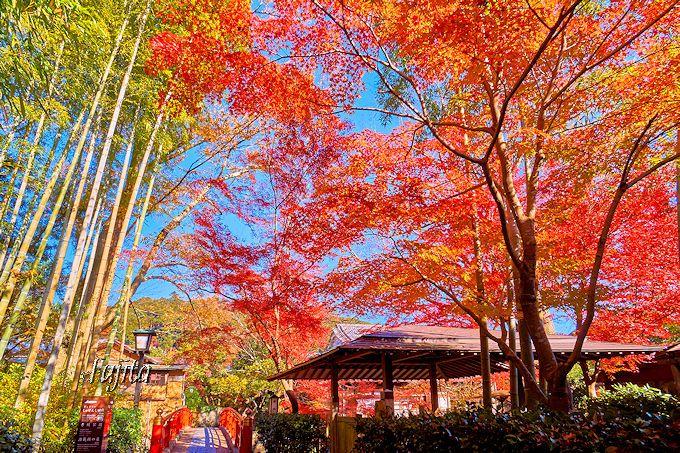 「竹林の小径」入口の紅葉が凄い!