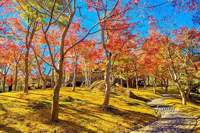 箱根美術館の紅葉は自然の芸術作品