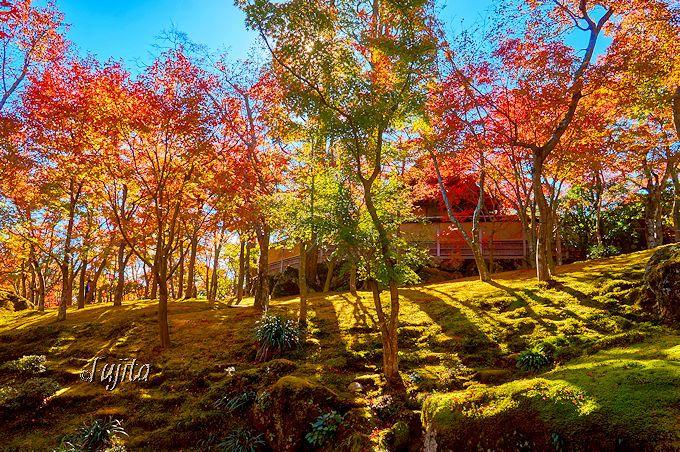 箱根美術館の紅葉は、箱根を代表する絶景!