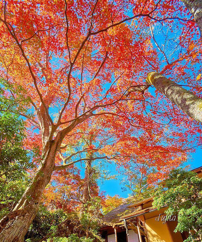 白雲洞茶苑の紅葉が美しい