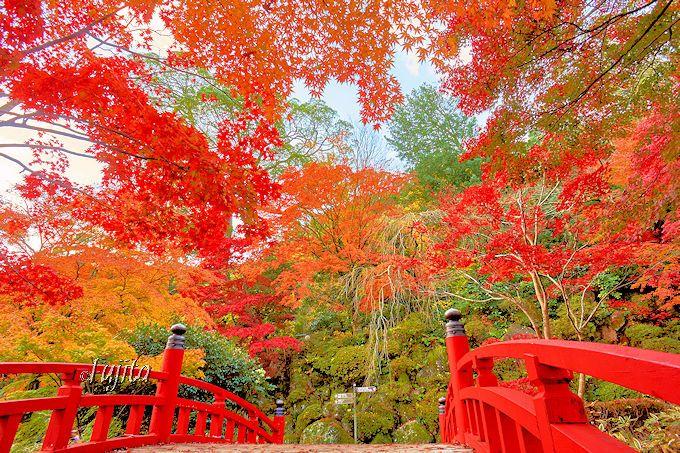 梅だけじゃない!ほたるも紅葉も楽しめる「熱海梅園」