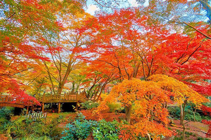双眉橋周辺は紅葉が最も多い!