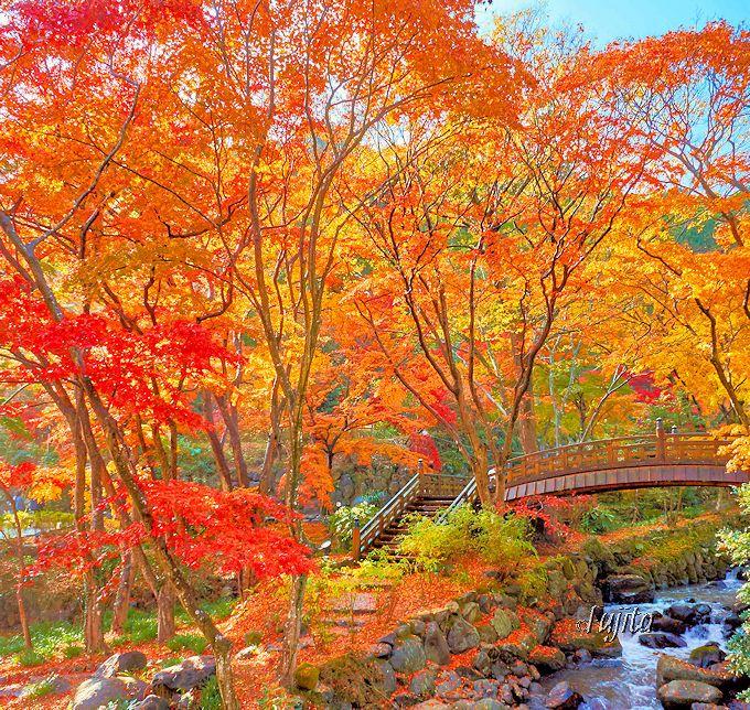 双眉橋下流の紅葉が一番のおすすめ!