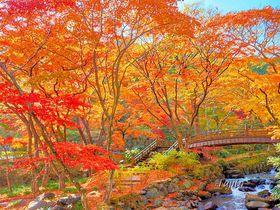 熱海温泉で紅葉狩り!熱海梅園の雙眉橋と駐杖橋が撮影ポイント