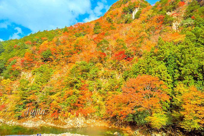 香落渓で一番紅葉が密集する「もみじ谷」