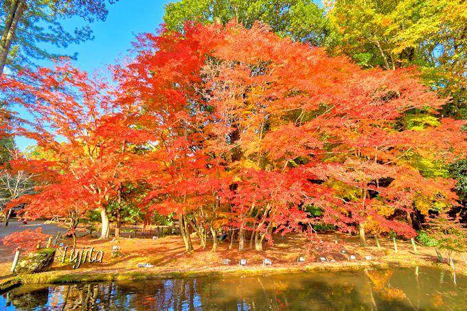 紅葉が特に美しい木を入念に下見しよう