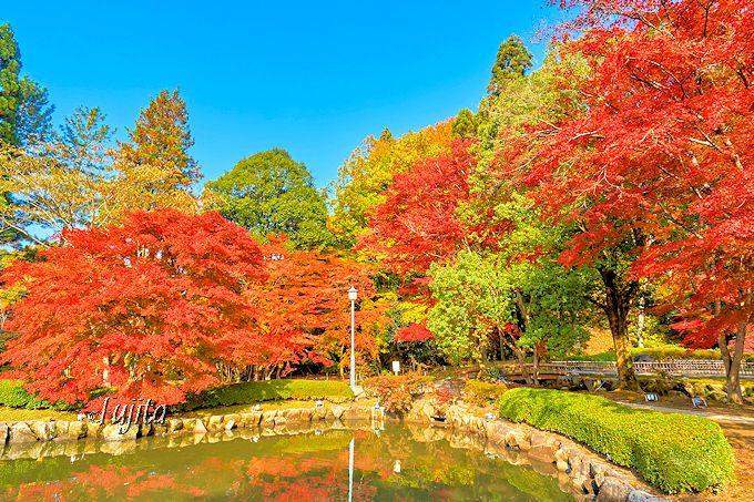 昼間も紅葉が美しい!曽木公園の紅葉ライトアップを下見