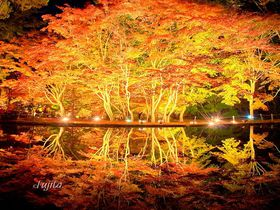 紅葉のライトアップスポットおすすめ10選 秋の夜の風物詩!