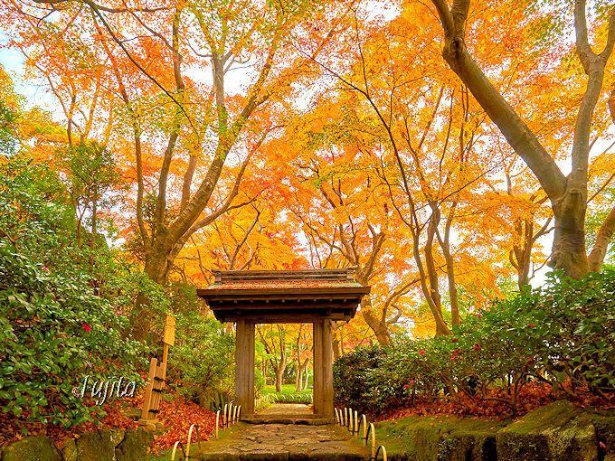 MOA美術館の紅葉名所「茶の庭」は、毎年秋に無料公開!