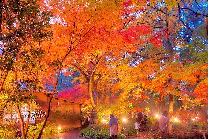 平林寺境内林の紅葉ライトアップ!