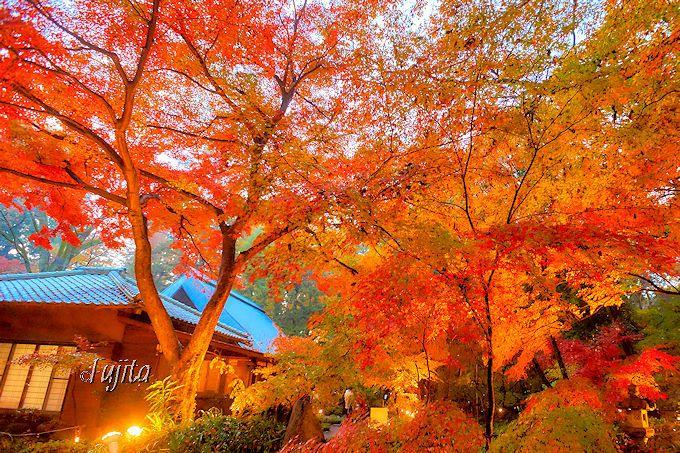 紅葉が素晴らしい「睡足軒」について