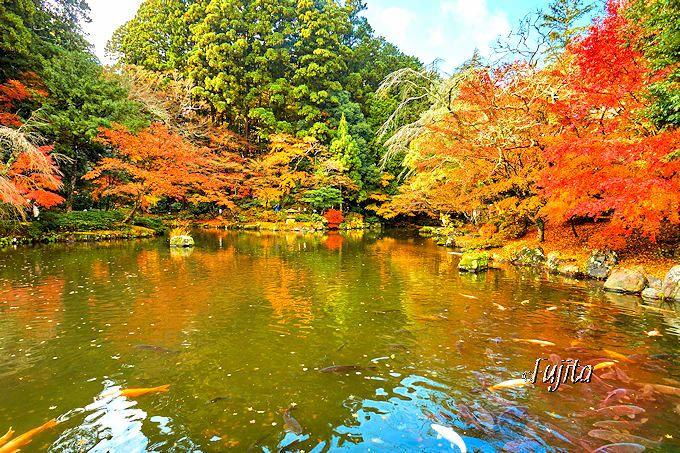 成田山公園「竜樹の池」の紅葉
