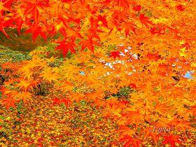 成田山公園の紅葉は晩秋も見頃!千葉を代表する紅葉狩り名所