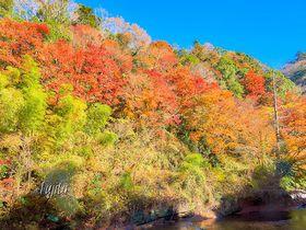 養老渓谷の紅葉4選!千葉のおすすめ紅葉狩りスポット