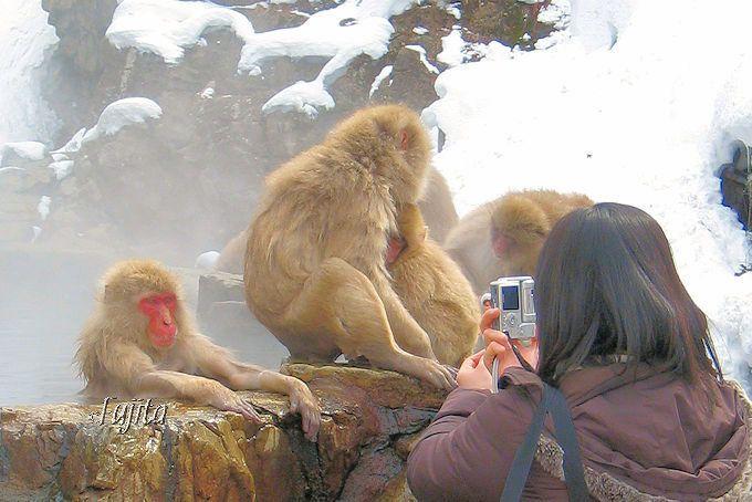 スノーモンキーに会える!長野・地獄谷温泉の雪猿と雪見露天風呂
