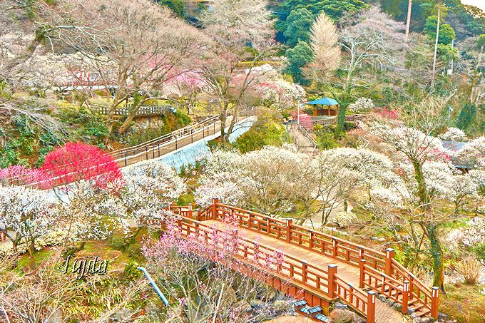 第2位・熱海梅園の全景と香浮橋