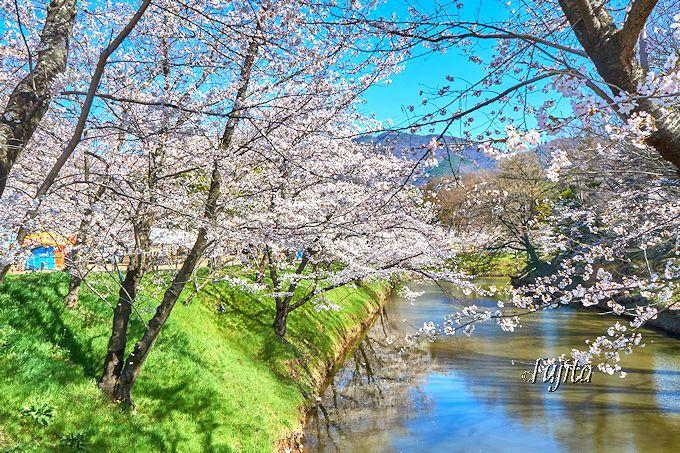 上田城「千本桜まつり」では、お堀を一周しよう!