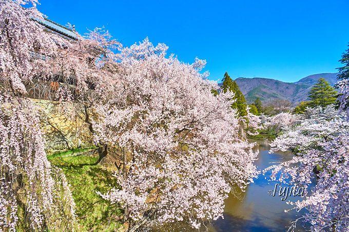 真田丸の舞台が絶景の花見名所に!千本桜まつりの開催地「信州・上田城」