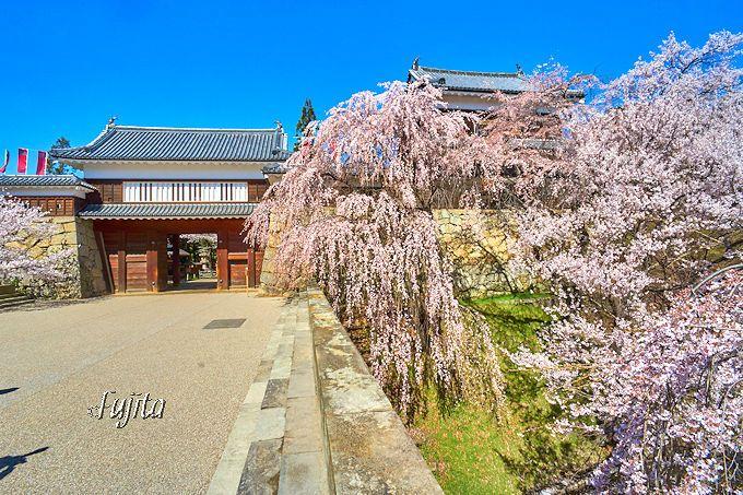 千本桜まつりを代表する景観!上田城正門「東虎口櫓門」