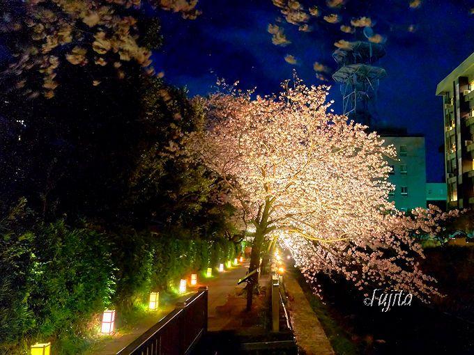 夜桜ライトアップの後は、噴水ショーも楽しもう!