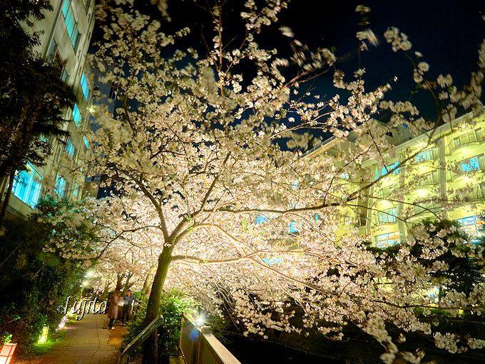伊東温泉の中心で、夜桜ライトアップを満喫!