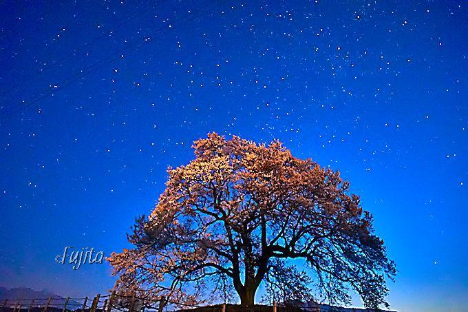 神秘の絶景!桜と星空のコラボ