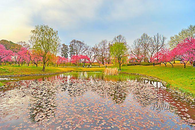 花桃と池のコラボも美しい!