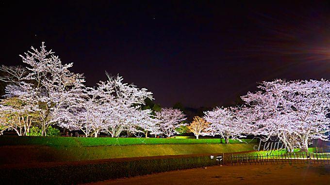 夜桜屏風で知る額縁効果の威力!