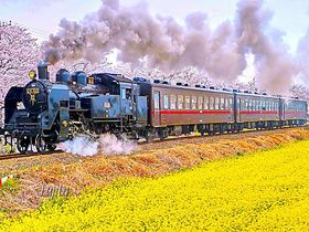 春はこれに乗らなきゃ!桜が楽しめる鉄道路線とスポット7選