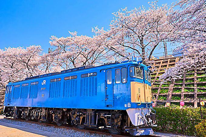 甚六桜公園や大日影トンネルも必見!
