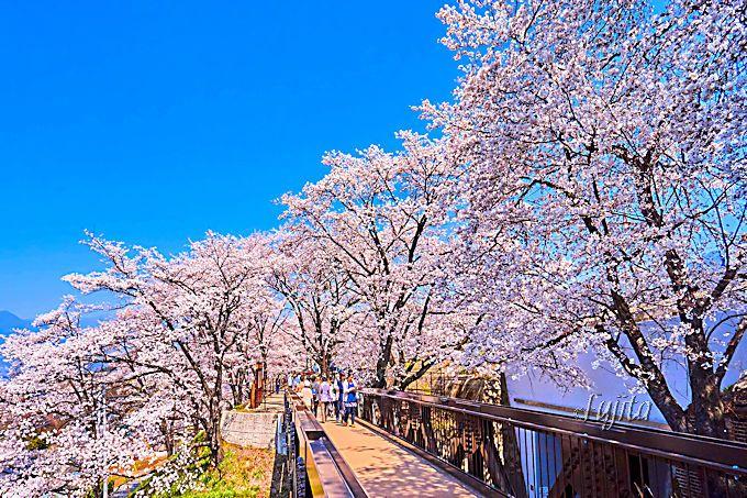 甚六桜最大の見所!旧勝沼駅跡の絶景