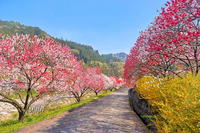 GWは日本一の花桃と星空へ!南信州・月川温泉「野熊の庄 月川」