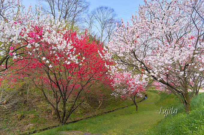花桃の里を隅々まで探検!月川温泉「野熊の庄 月川」