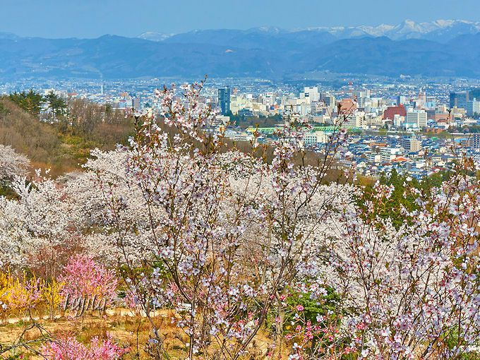 公園の頂上から、桜と福島市街地を一望!