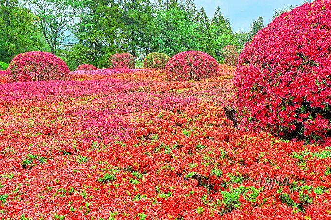つつじの絶景でアートな花見!千葉・DIC川村記念美術館の自然散策路