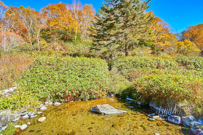 石の湯ロッジは、志賀高原の大自然に抱かれた宿!