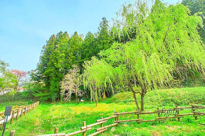 昼間は豊かな緑が印象的!箱島ホタル第一保護地