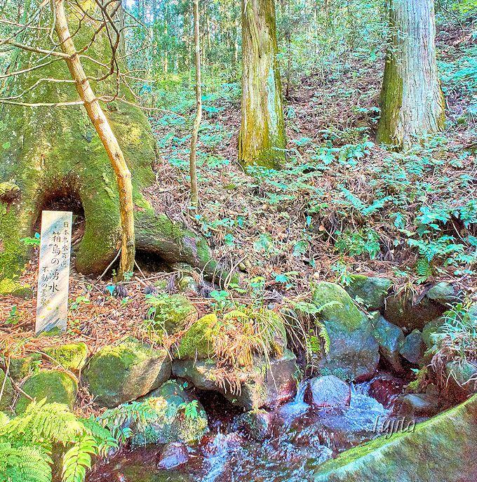 ホタルを育てる名水、箱島湧水を先に見学!