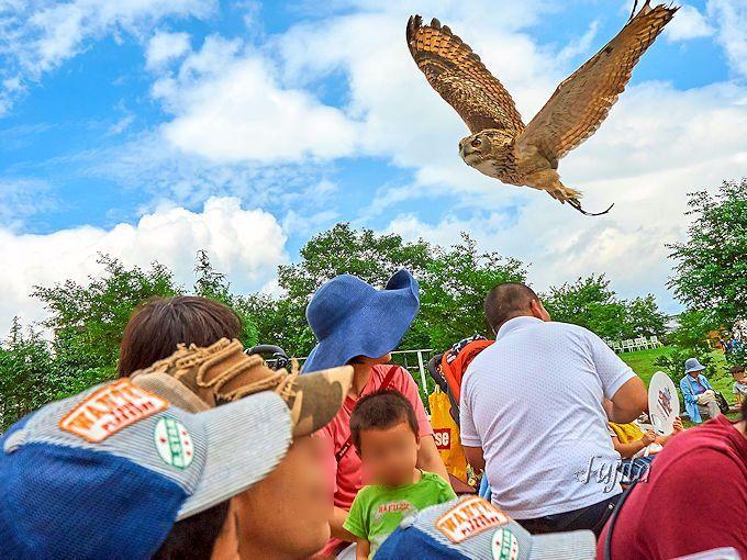 観客の頭上を鳥が飛び交う!圧巻の「バードパフォーマンスショー」