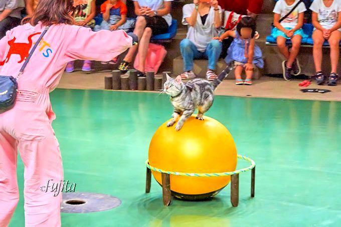 貴重な猫の曲芸は必見!那須どうぶつ王国「ザ・キャッツ」