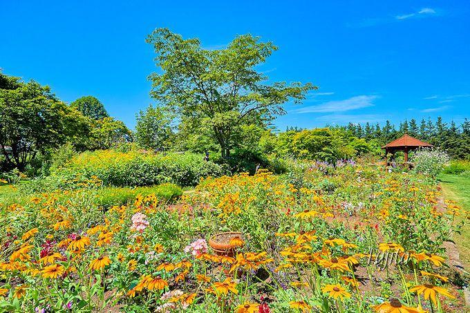 紫竹ガーデンの宿根草と一年草の違い分かりますか?