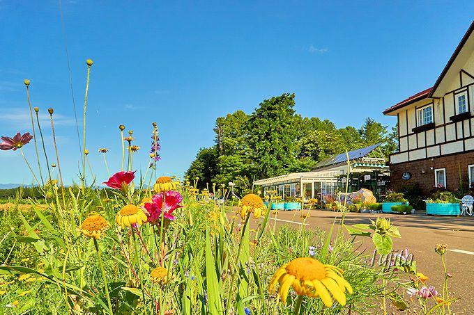 紫竹ガーデンは入園前からワイルドフラワーがお出迎え!